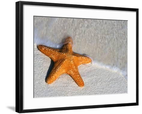 Starfish on Shore--Framed Art Print