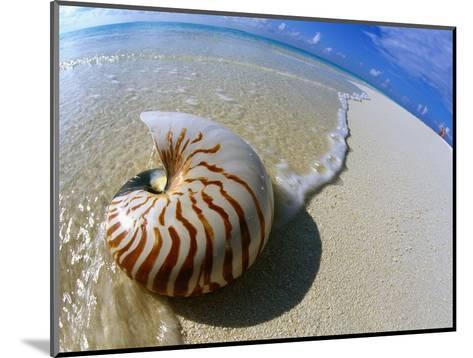 Seashell Resting on Shore-Leslie Richard Jacobs-Mounted Photographic Print