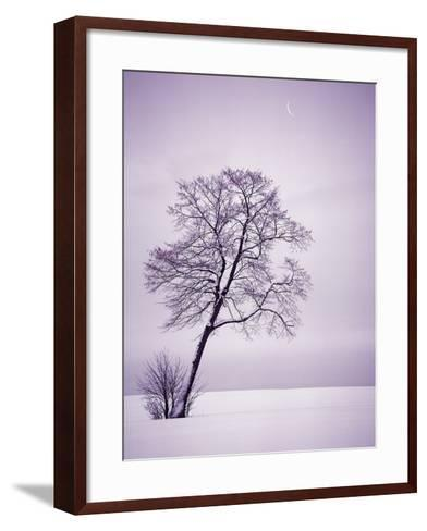 Lone Tree in Snow-Jim Zuckerman-Framed Art Print