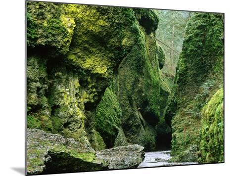 Moss Coating Oneonta Gorge-Jim Zuckerman-Mounted Photographic Print