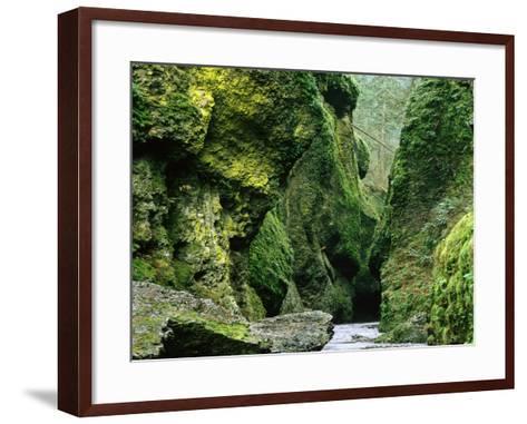 Moss Coating Oneonta Gorge-Jim Zuckerman-Framed Art Print
