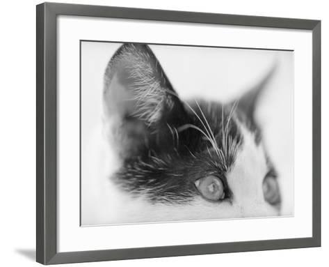 Cat's Head-Henry Horenstein-Framed Art Print