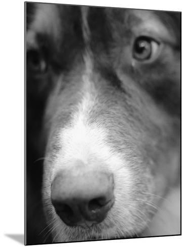 Dog's Nose-Henry Horenstein-Mounted Photographic Print