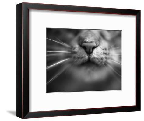Cat's Nose and Whiskers-Henry Horenstein-Framed Art Print