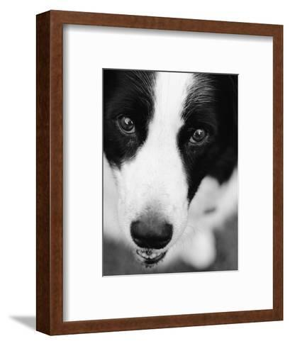 Head of Border Collie-Henry Horenstein-Framed Art Print