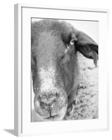 Sheep's Face-Henry Horenstein-Framed Art Print