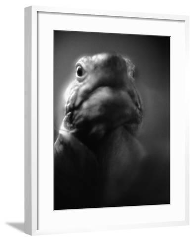 Reptile's Face-Henry Horenstein-Framed Art Print