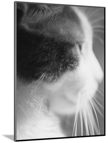 Cat's Head-Henry Horenstein-Mounted Photographic Print