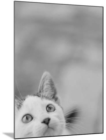 Cat's Head-Henry Horenstein-Mounted Photographic Print