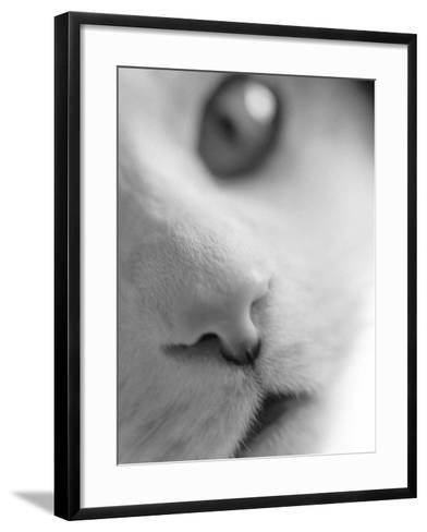 Cat's Mouth-Henry Horenstein-Framed Art Print