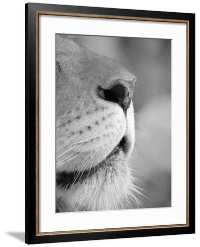 Lion's Nose-Henry Horenstein-Framed Art Print