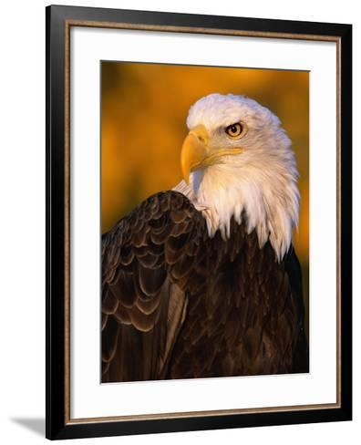Bald Eagle-W^ Perry Conway-Framed Art Print