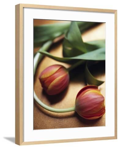 Orange Tulips-Colin Anderson-Framed Art Print