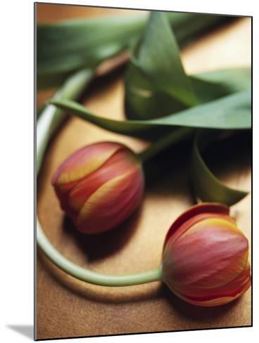 Orange Tulips-Colin Anderson-Mounted Photographic Print