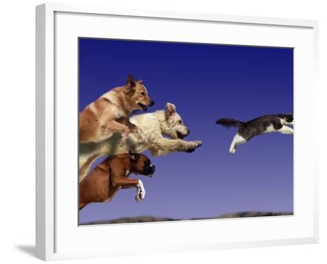 Dogs Chasing Cat-Tim Davis-Framed Art Print