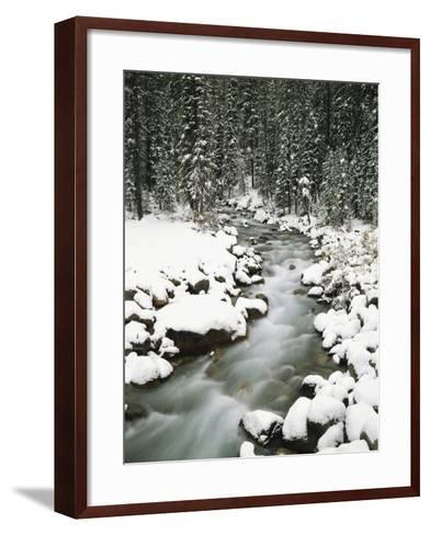 Creek Winding Way Through Forest-Craig Tuttle-Framed Art Print