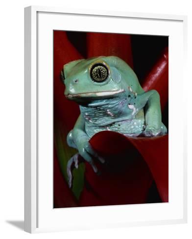 Monkey Tree Frog-David Northcott-Framed Art Print