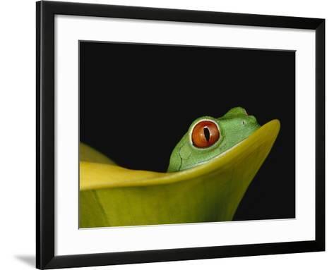Red-Eyed Tree Frog-David Northcott-Framed Art Print