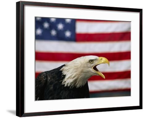 Bald Eagle and American Flag-W^ Perry Conway-Framed Art Print