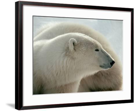 Polar Bear-George Lepp-Framed Art Print