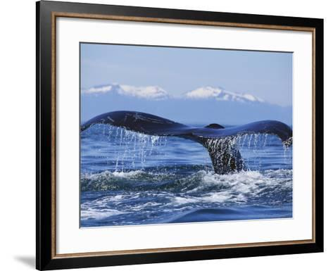 Tail of Surfacing Humpback Whale-Paul Souders-Framed Art Print
