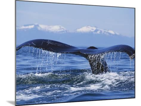 Tail of Surfacing Humpback Whale-Paul Souders-Mounted Photographic Print
