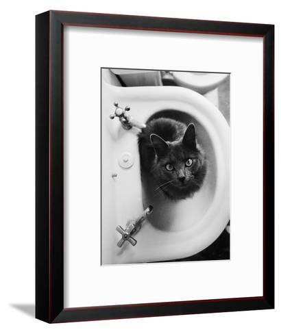 Cat Sitting In Bathroom Sink-Natalie Fobes-Framed Art Print