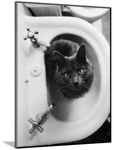 Cat Sitting In Bathroom Sink-Natalie Fobes-Mounted Photographic Print