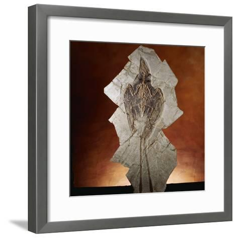 Fossil Bird-Layne Kennedy-Framed Art Print