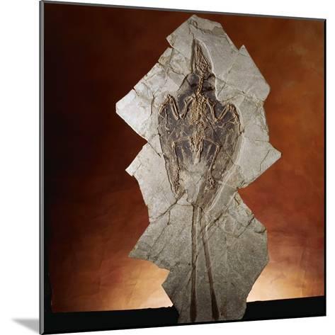 Fossil Bird-Layne Kennedy-Mounted Photographic Print