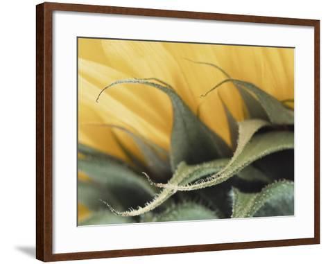 Sunflower Detail--Framed Art Print