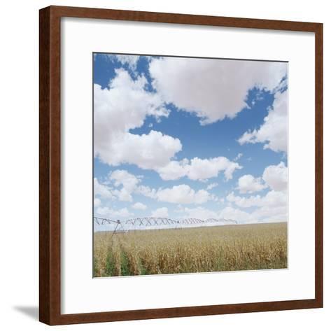 Crops growing in a field--Framed Art Print