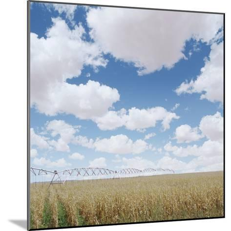 Crops growing in a field--Mounted Photographic Print