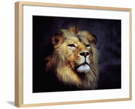 Male Lion--Framed Art Print