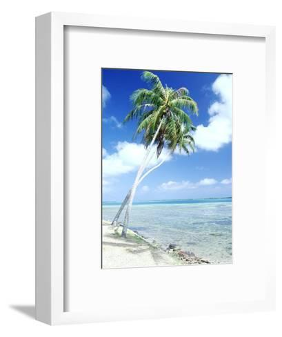 Palm Trees Along Shoreline--Framed Art Print