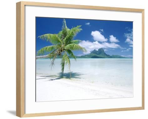 Palm Tree on a Tropical Beach--Framed Art Print