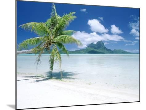 Palm Tree on a Tropical Beach--Mounted Photographic Print