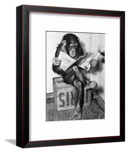 Chimpanzee Reading Newspaper Photographic Print by Bettmann | Art.com