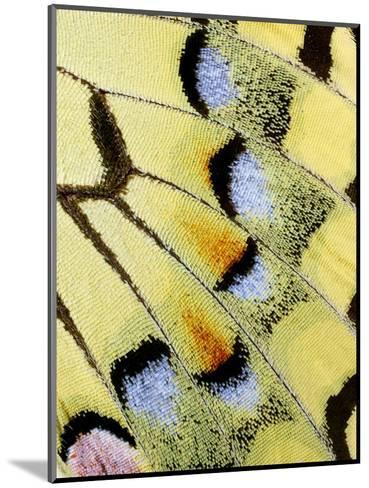 Wing of a Butterfly-Darrell Gulin-Mounted Photographic Print