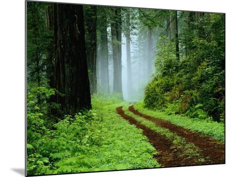 Unpaved Road in Redwoods Forest-Darrell Gulin-Mounted Photographic Print