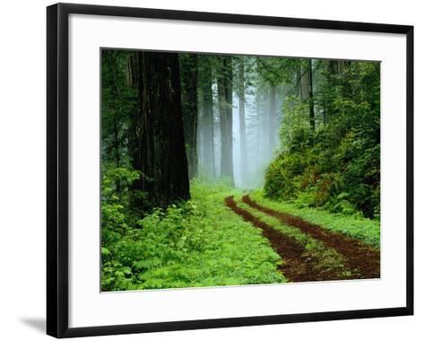 Unpaved Road in Redwoods Forest-Darrell Gulin-Framed Art Print