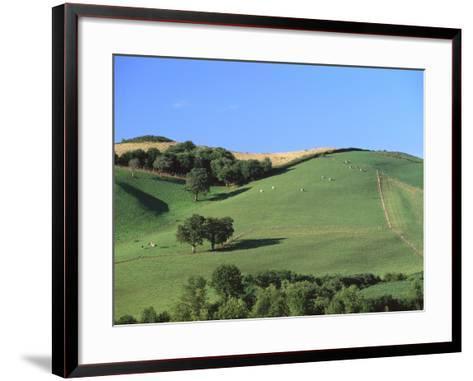 Cattle Grazing on Hillside-Owen Franken-Framed Art Print