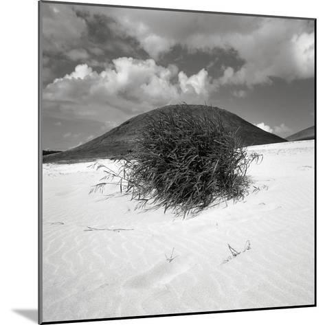 Hills Behind Cluster of Beach Grass--Mounted Photographic Print