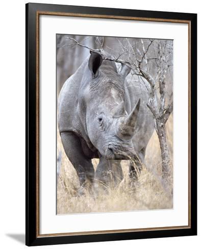 White Rhinoceroses--Framed Art Print