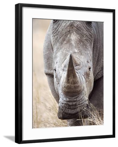 White Rhinoceros--Framed Art Print