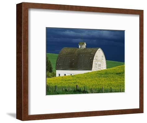 White Barn and Canola Field-Darrell Gulin-Framed Art Print