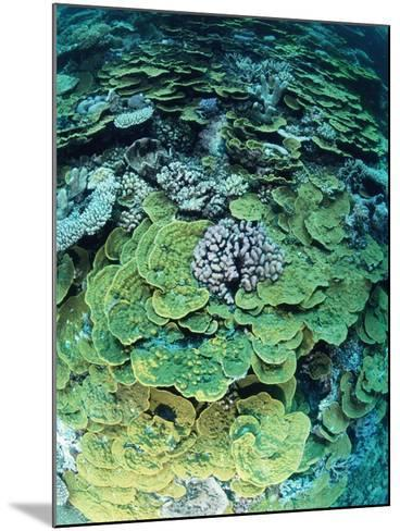 Elephant Ear Coral--Mounted Photographic Print