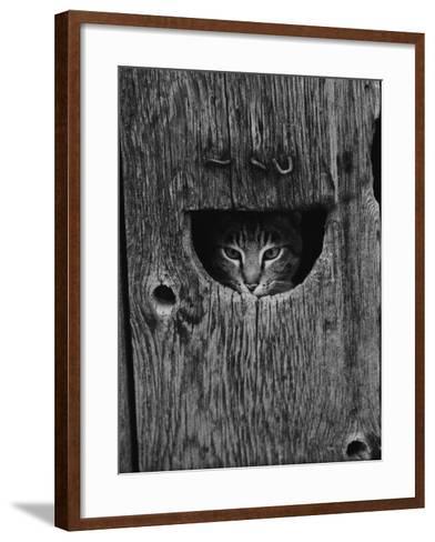 Cat Peeking Out from Barn-Josef Scaylea-Framed Art Print