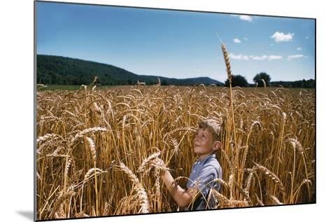 Boy Standing in Field of Wheat-William P^ Gottlieb-Mounted Photographic Print