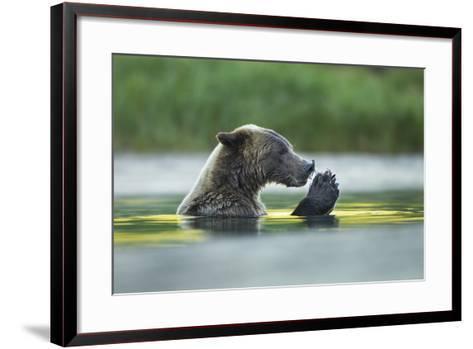 Brown Bear and Salmon, Katmai National Park, Alaska-Paul Souders-Framed Art Print